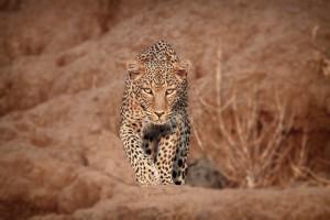 Wildlife photographer and low light