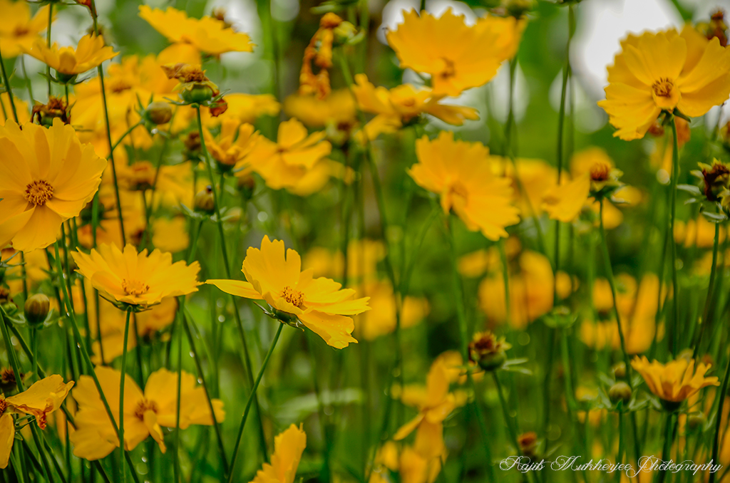 Flowers photography: tips to shoot better images