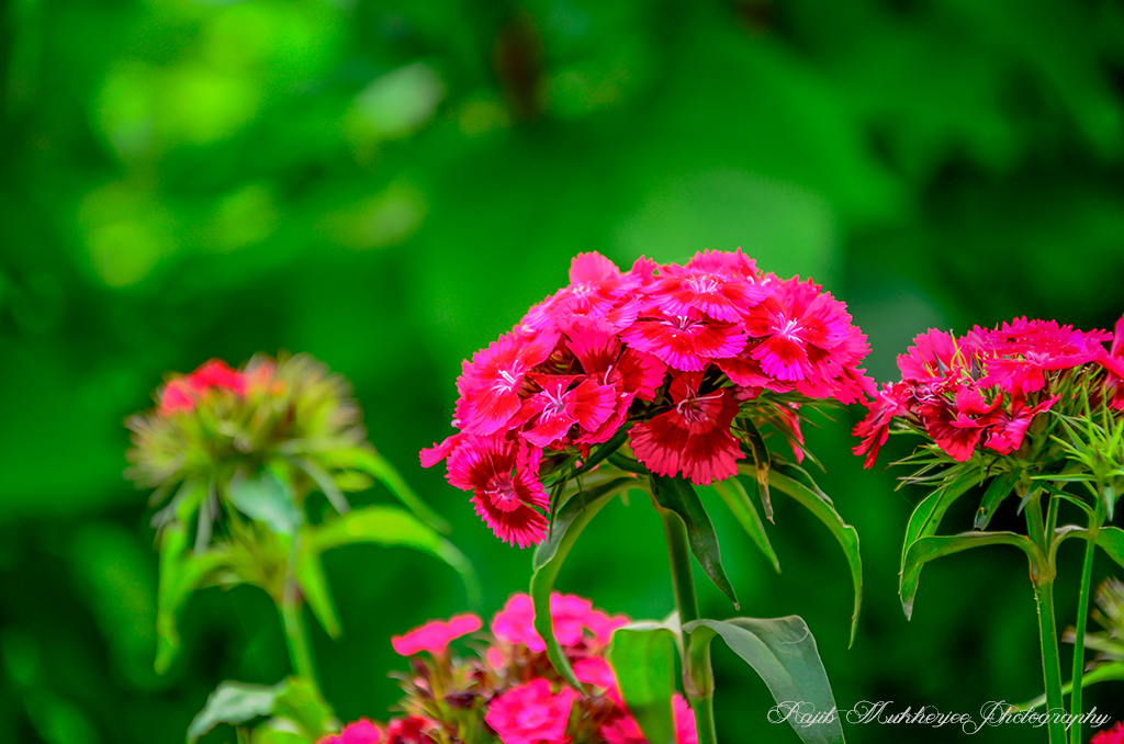 Flowers Photography For Beginners
