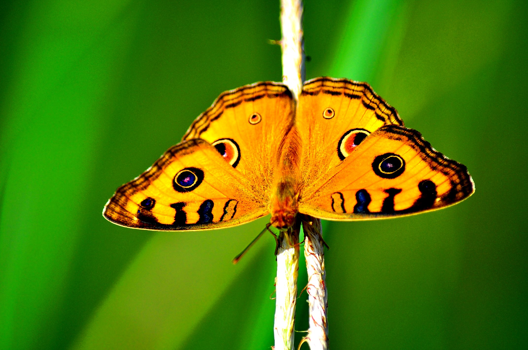 Butterfly Photography Tips (Main Image)