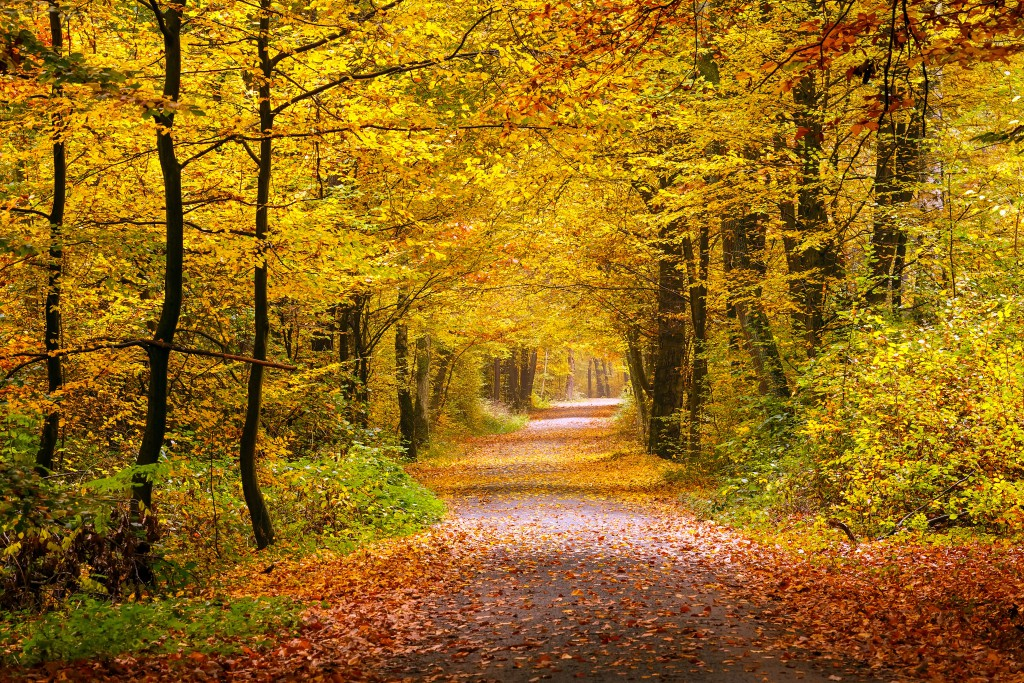 Autumn forest photography