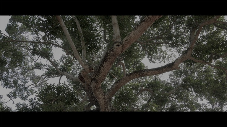 How to Process your Images for the Cinematic Look?