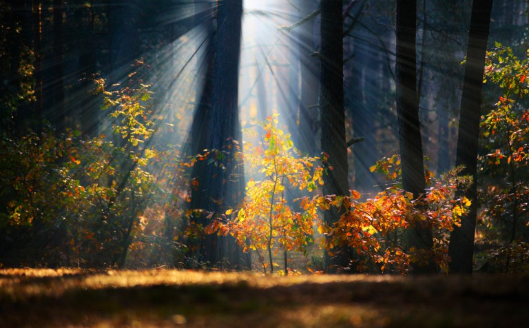 How to do Breathtaking Forest Photography